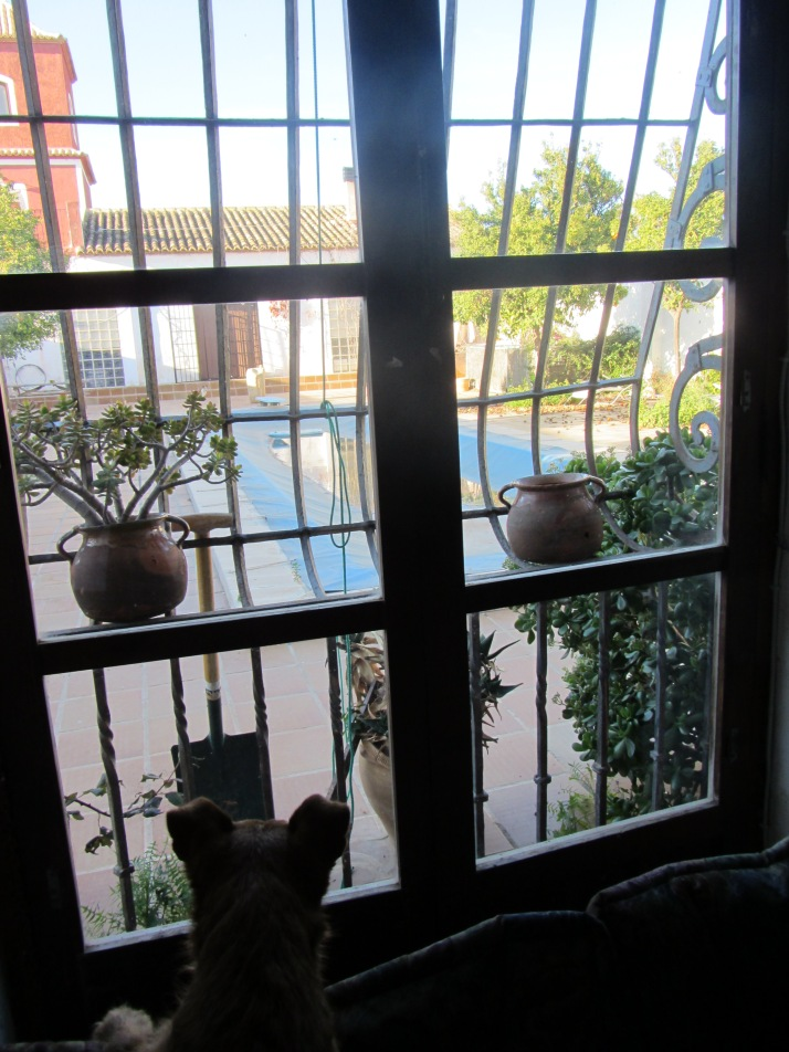 """La ventana"". Foto: Bárbara"