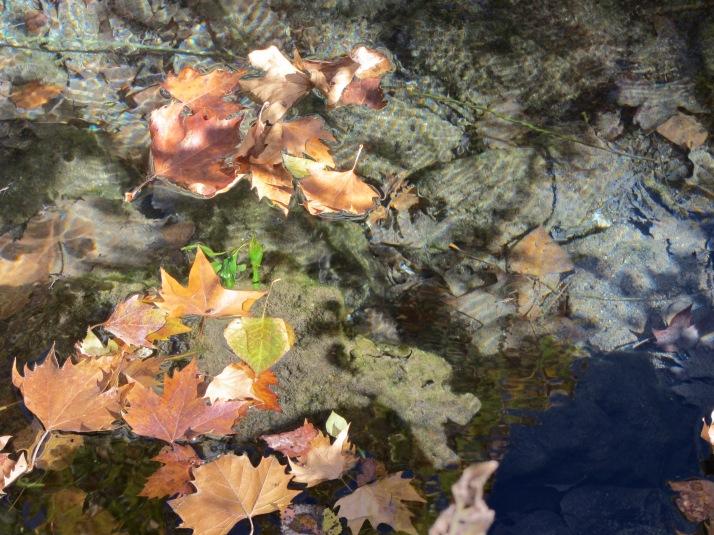 """""""El otoño"""". Foto: Bárbara."""