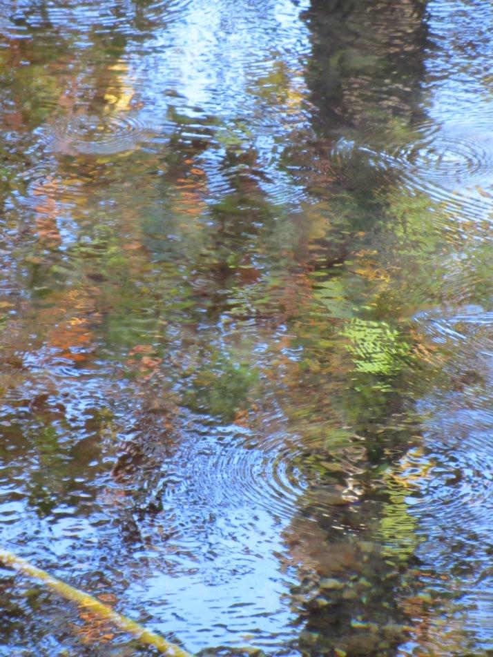 """""""Reflejos en el agua"""". Foto: Bárbara."""