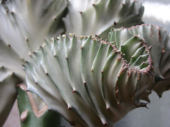 Cactus. Foto: Bárbara