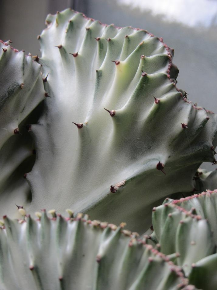 Cactus. Foto: Barbara