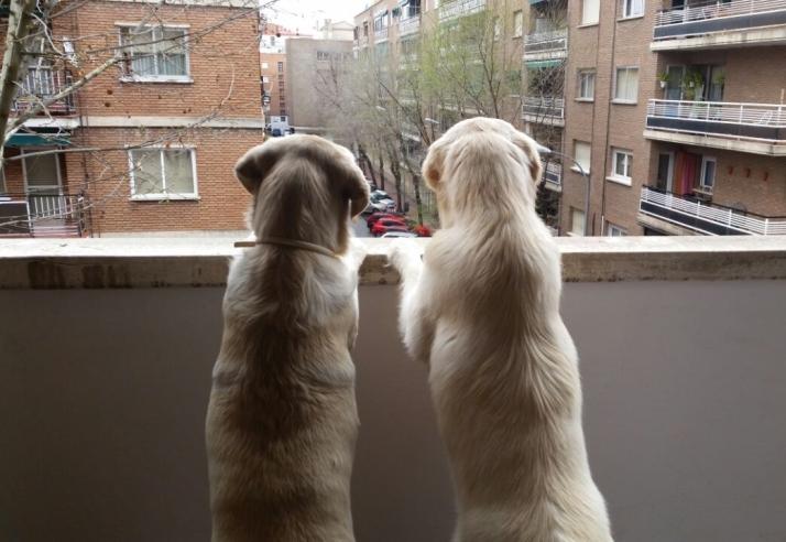 Oso y Duna. Foto: Alex y Natalia